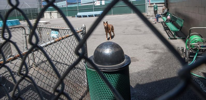 Snooty dog owners hijacked NYC park for 'private' kennel club