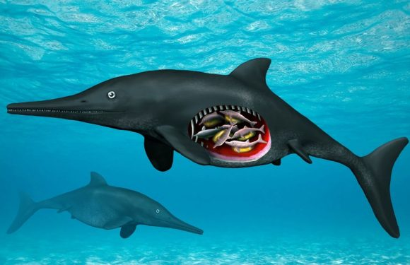 Skeleton of 180 million-year-old marine reptile pregnant with octuplets