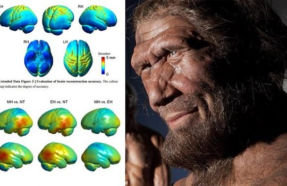 Is THIS what killed off the Neanderthals?