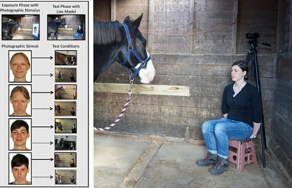 Horses remember faces and recognise people's moods from grumpy photos