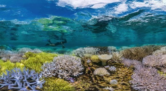 Half of the Great Barrier Reef has died since 2016 — here's what happens if all coral reefs on Earth die off