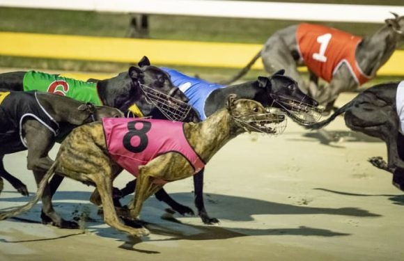 Field set as Canberra greyhound owners prepare for final Canberra Cup