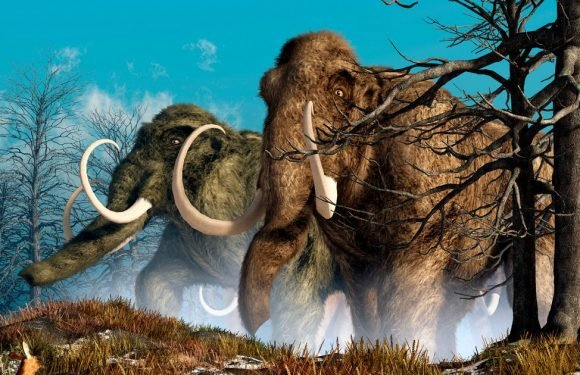 Woolly mammoths could be brought back to life as scientists begin cloning DNA