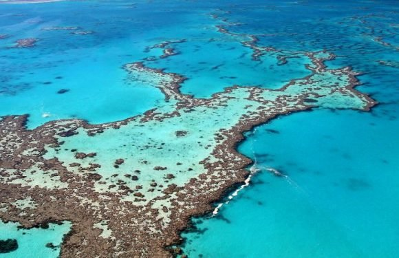 Great Barrier Reef Restoration And Protection Plans Underway In Australia