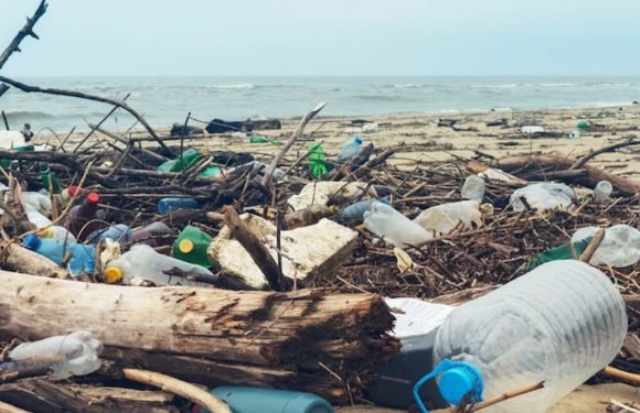Henderson Island: Remote South Pacific Island Has World's Highest Density Of Plastic Waste