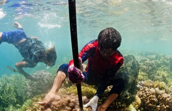 Indonesian tribe has evolved extra large spleens for free diving