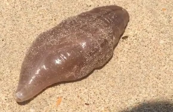 Mystery of strange sea creatures washed up on beach at holiday hotspot