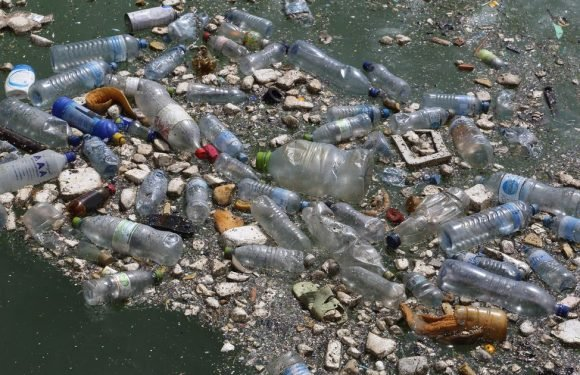 Accidental discovery brings new hope in battle against plastic rubbish