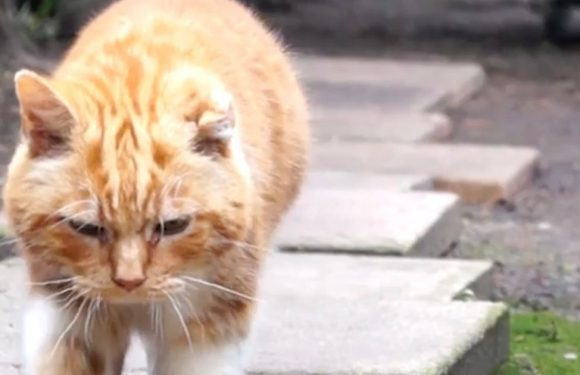 Cat with huge tumour saved from brink of death – after owner fed him cannabis