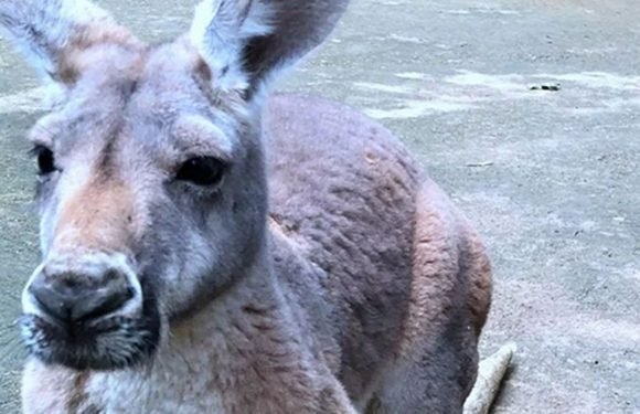 Kangaroo killed by zoo visitors who threw bricks to try and get reaction