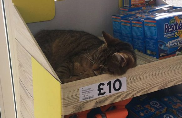 Man spots cat 'for sale' in Tesco – turns out to be famous moggie