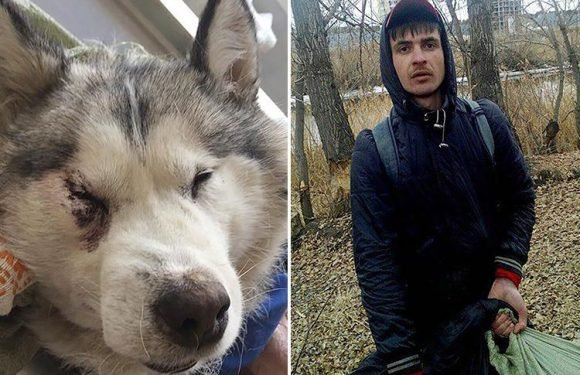 Russian man is caught strangling and skinning a husky dog in a park 'to supply meat for doner kebabs'