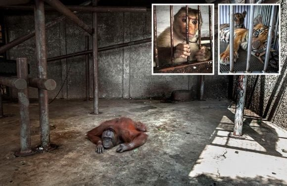 Thailand zoo horror revealed in sickening snaps showing emaciated animals shackled in tiny cages