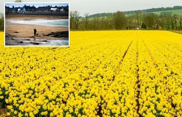 UK weather set for 22C temperatures and sun next week as Spring FINALLY arrives