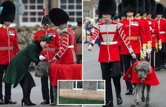 Furious Irish Guards go to war over the treatment of beloved wolfhound mascot, who's 'being worked to his death bed'