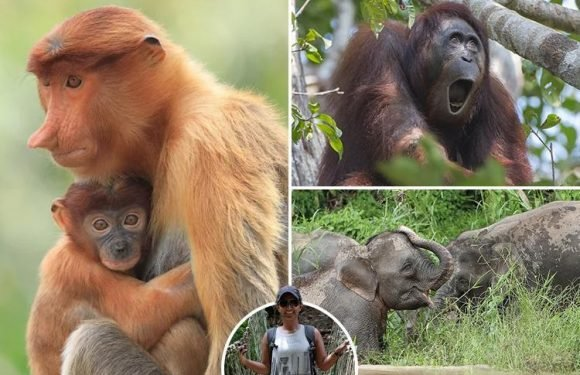 Meet beasts from the South East including elephants, orangutans and Nemo on an intrepid trip to Borneo