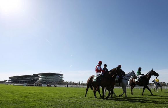 Hot weather forces Cheltenham racecourse to abandon a race with jockeys worried the horses were unable to cope with the heat