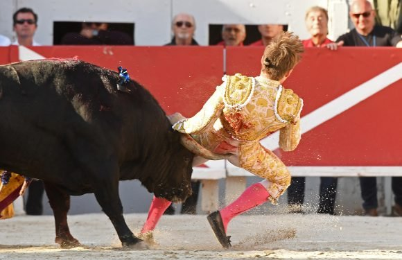 Matador gored in the butt by raging bull
