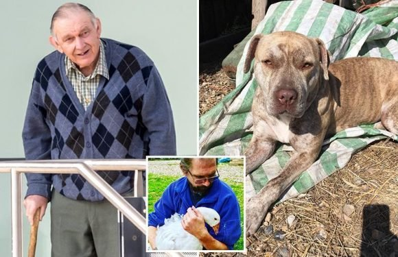 OAP 'blasted neighbour's dog to death with shotgun before threatening owner after pet went into his garden'