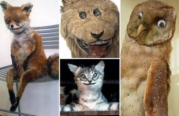 Hilarious snaps show terrible taxidermists' failed attempts at stuffing animals