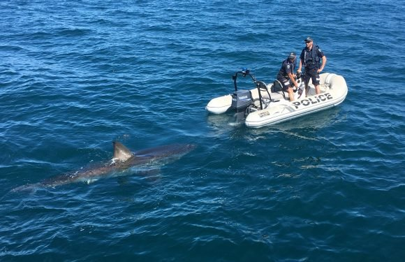 Huge great white shark filmed circling tiny police dinghy in terrifying footage off Australian coast