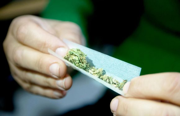 Cannabis tycoons plot to make drug legal in Britain in next five years