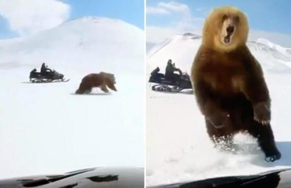 Heart-stopping moment angry bear attacks its tormentors after being chased by a snowmobile