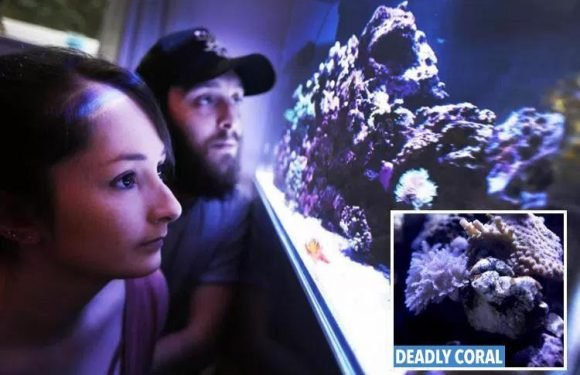 Deadly fumes from coral in home fish tank send TEN people to hospital