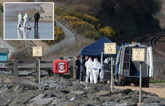 Body found on Sussex beach 'with its throat slashed'