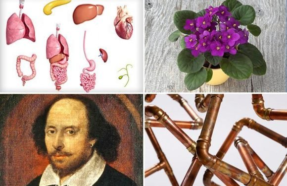 How clever do you think you are? Test yourself with these 14 GCSE questions