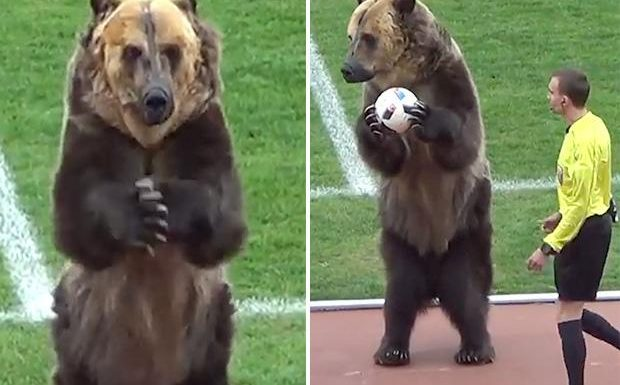 Outrage as bear is made to hand match-ball to referee before Russian football match