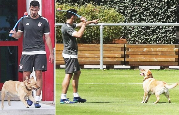 Bayern Munich star Mats Hummels prepares for Real Madrid clash… by playing fetch with pet dog Coco at training