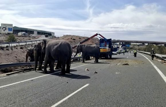 Truck carrying elephants crashes, at least 1 killed