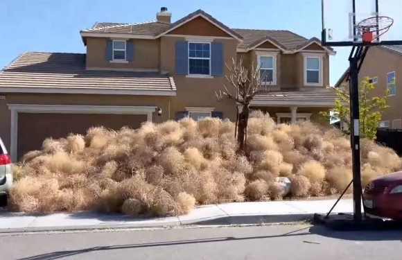 Tumbleweeds are taking over this town, engulfing homes
