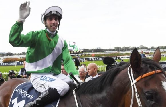 Avdulla back in the saddle of favourites after cow bone graft