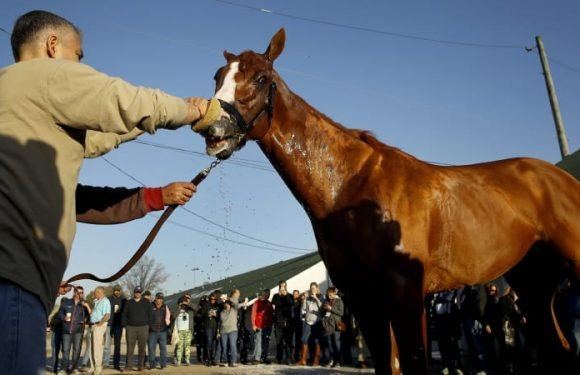 Bloodlines: New superstar could emerge from Kentucky Derby
