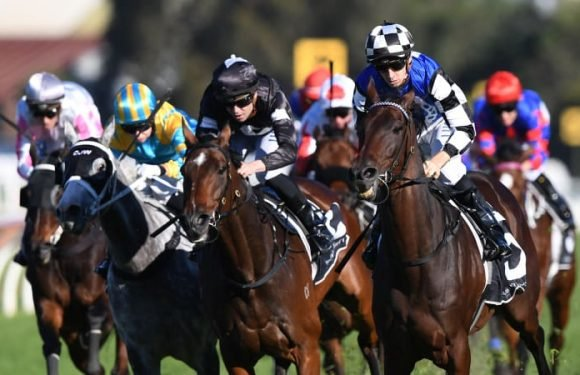 Our Century steps up to ideal trip in McKell Cup