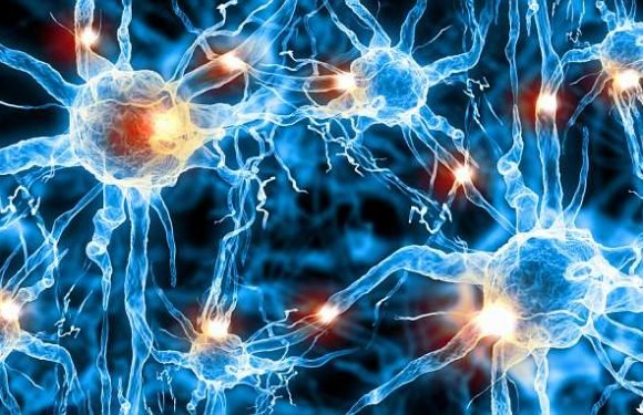 Landmark discovery finds smart people have bigger brain cells