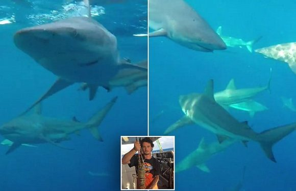 Fisherman captures incredible footage of a school of THIRTY sharks