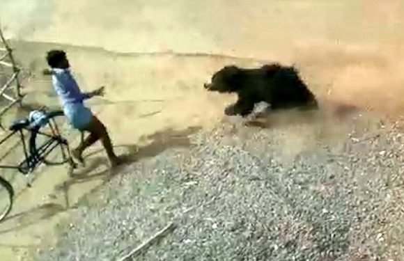 Raging bear is caught in a fishing net after attacking four villagers