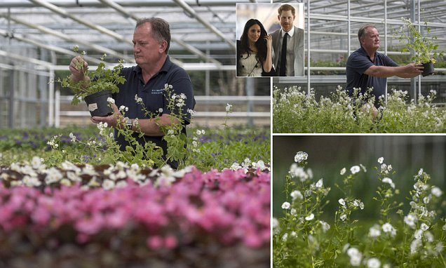 Royal gardener still in the dark about Harry and Meghan's floral plans