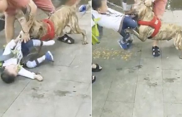Horrifying moment boy is attacked by a pit bull