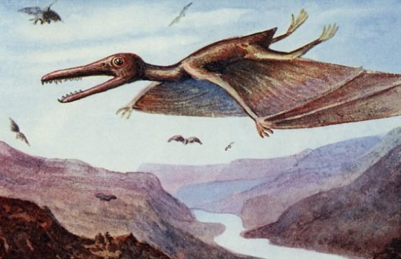 Pterodactyls DIDN'T fly like bats, according to new research