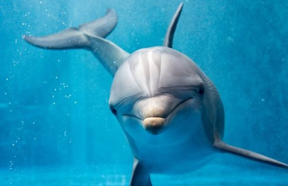 Dolphin 'happiness' is measured for the first time