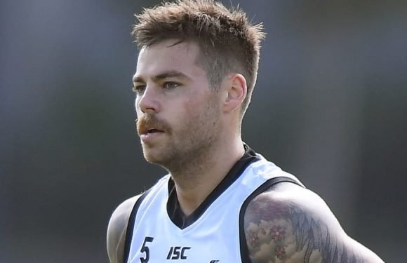 Key Magpie pair out at least another three weeks