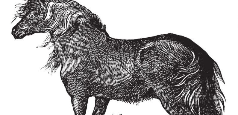 Utah Family Unearths Ice Age Horse Fossil In Their Backyard [Video]
