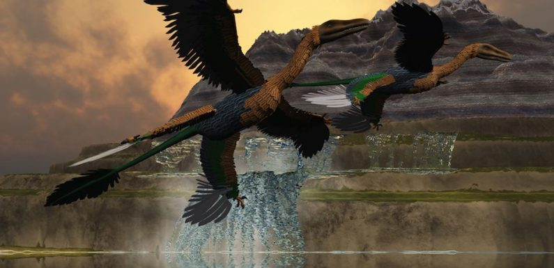 New Study Reveals Which Birds Survived The Dinosaur-Killing Chicxulub Asteroid