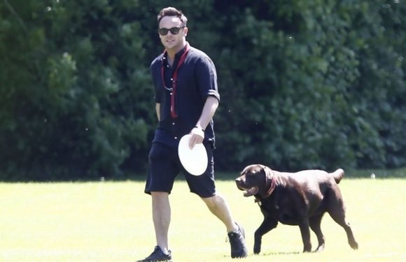 Ant McPartlin puts troubles behind him as he enjoys a sunshine stroll with dog