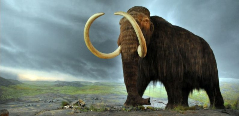Scientists Are Trying To Bring Back Woolly Mammoth Genes In Order To Fight Global Warming