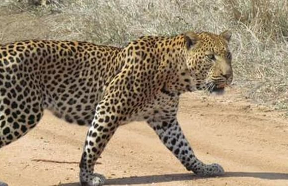 Toddler, 3, snatched and eaten by a leopard at safari park